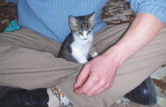http://mamour44444.cowblog.fr/images/Moietstykette.jpg